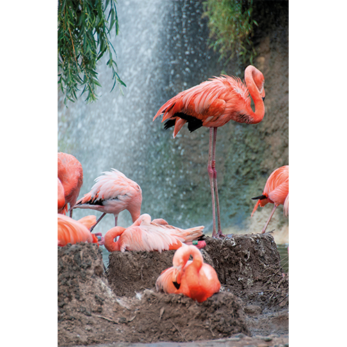 Repro Voorne - tuinposter flamingo's