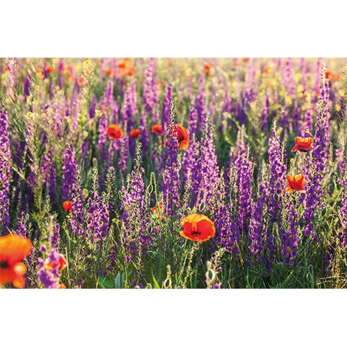 Tuinposter natuur