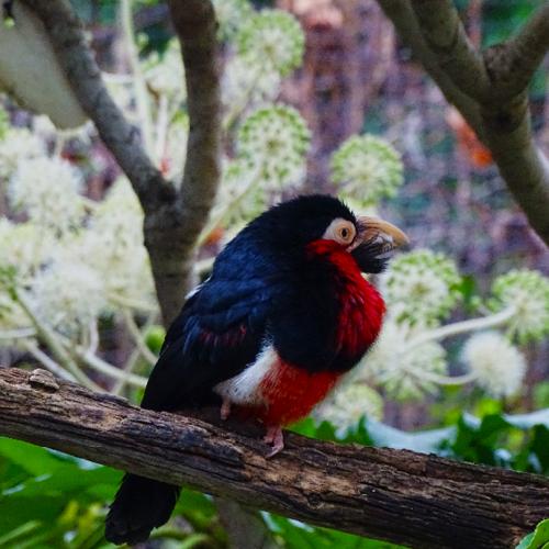 Exotische vogel CV1003