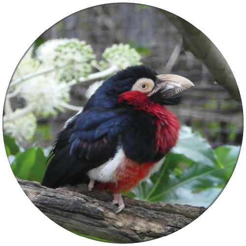 Exotische vogel ZBC003