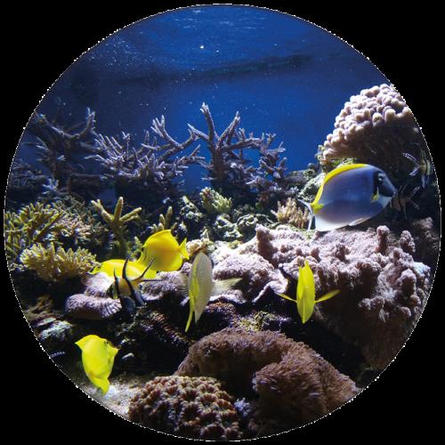 Tropische vissen ZBC005