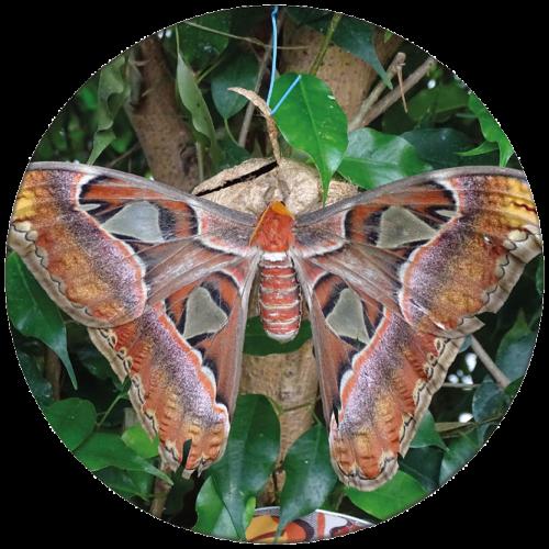 Vlinder 6 ZBC012